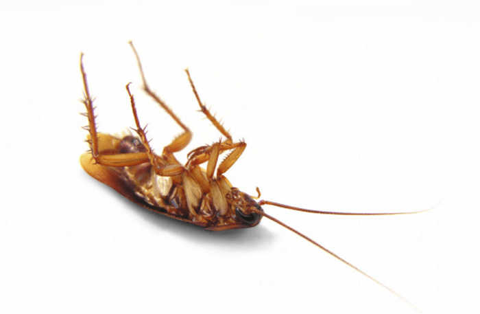 8 Signs Your Home is Infested With Cockroaches (VIDEO)